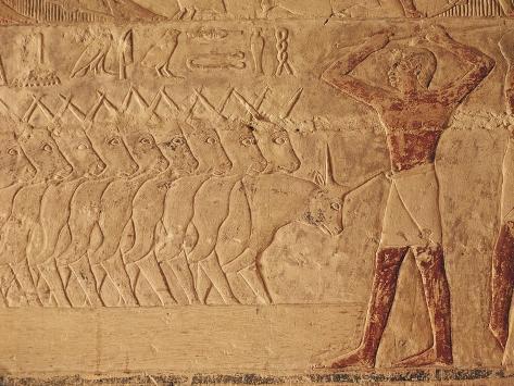 Egypt, Saqqara, Relief of Cattle Rearer Giclee Print