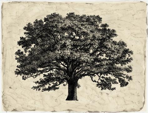Elephant Tree Art Print
