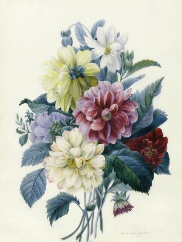 Mixed Dahlias, 1840 Stampa giclée