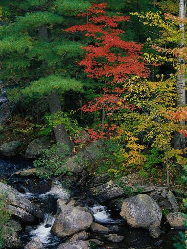 Fall Scenic, Acadia National Park, Maine Photographic Print