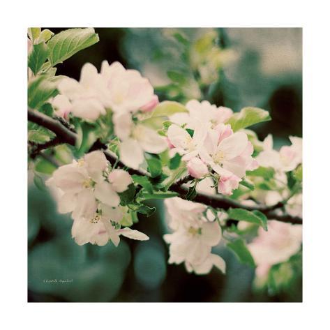 Apple Blossoms I Crop Art Print