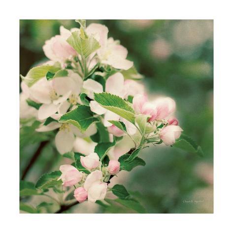Apple Blossoms II Crop Art Print