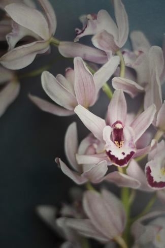 Dark Orchid II Art Print