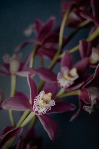 Dark Orchid III Art Print