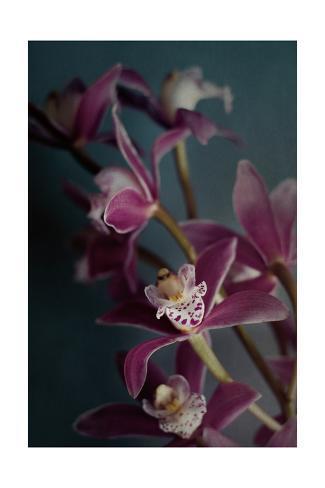 Dark Orchid IV v.2 Art Print