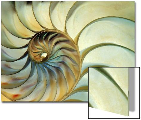 Close-up of Nautilus Shell Spirals Art on Acrylic