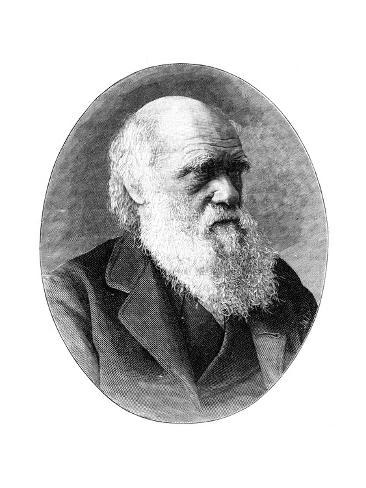 charles darwins contribution to 19th century england Evolution: darwin versus wallace alfred russel wallace developed a similar theory to charles darwin the life and works of the scientist who discovered evolution through natural selection at the same time as darwin, are being celebrated in cambridge.