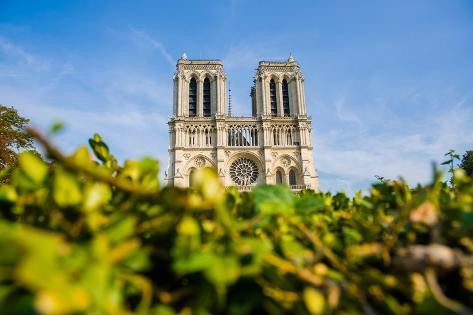 Notre Dame De Paris Cathedral in Summer Day Photographic Print