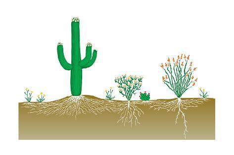 Vegetation Profile of a Desert. Biosphere, Earth Sciences Poster