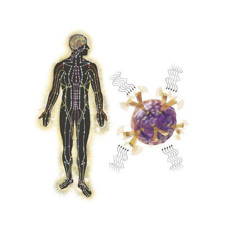 Energy Meridians of the Human Body Lámina
