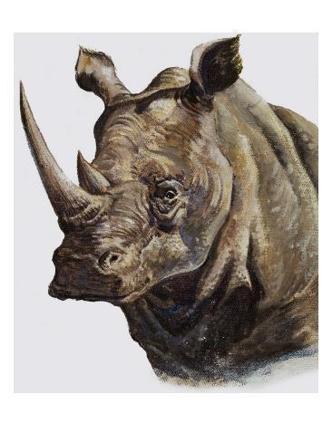 White Rhinoceros, 1980 Giclee Print