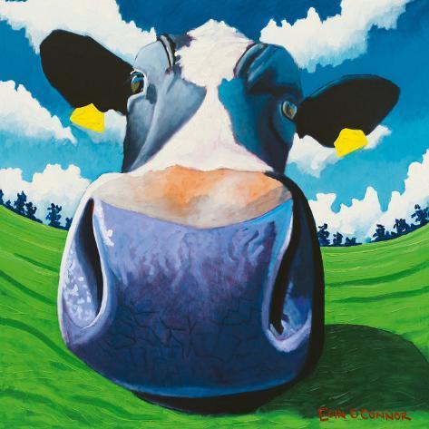 Cow IV, Big Nose Art Print
