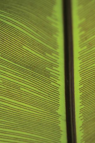 Leaf Detail IV Valokuvavedos