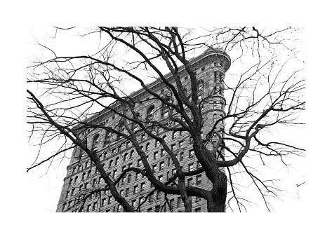 Flatiron with Tree Giclee Print