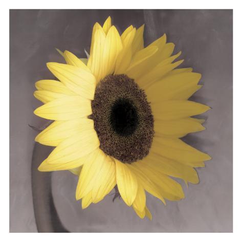 Sunflower Konstprint