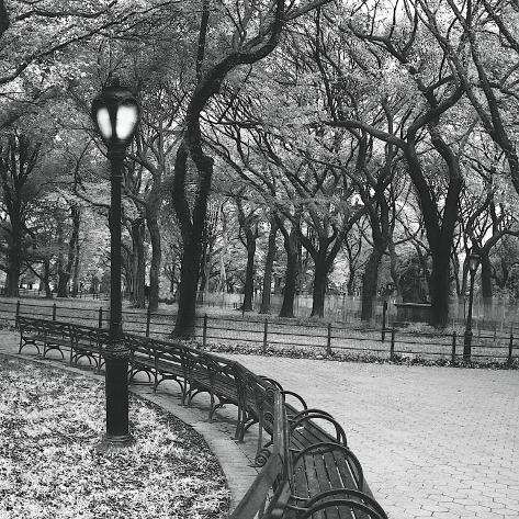 Walk Through the Park Stretched Canvas Print