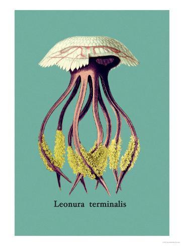 Jellyfish: Leonura Terminalis Art Print