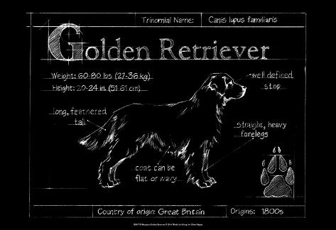 Blueprint golden retriever poster by ethan harper allposters blueprint golden retriever malvernweather Image collections