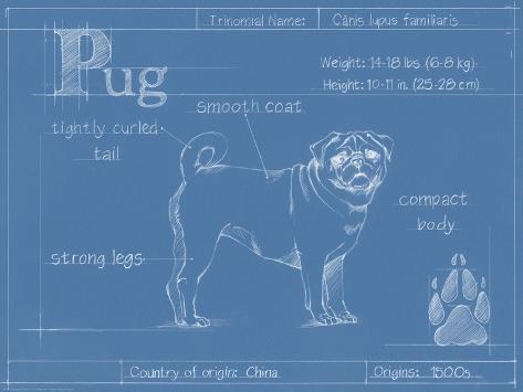 Blueprint Pug Art Print