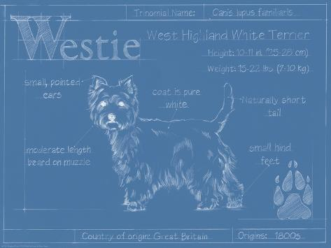 Blueprint Westie Art Print