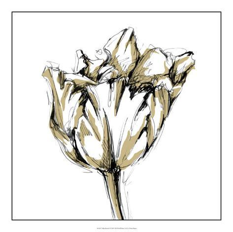 tulip sketch i giclee print by ethan harper at allposters com au