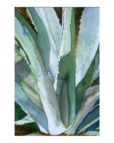 Agave 1 Stretched Canvas Print
