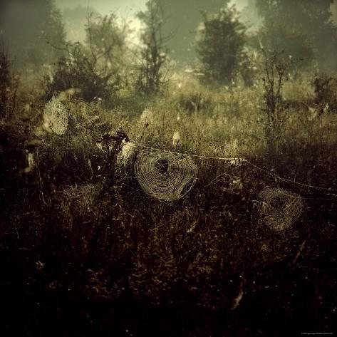 Spiderwebs in Field Photographic Print