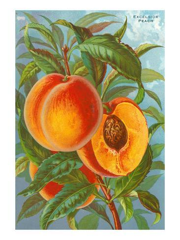 Excelsior Peach Taidevedos