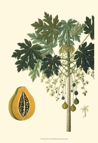 Exotic Palms V Art Print