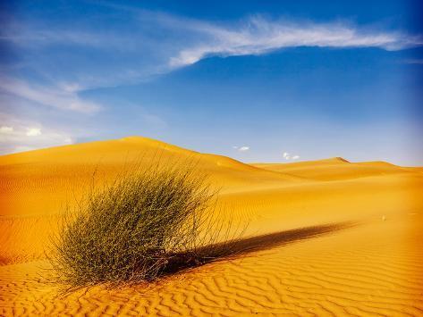 Dunes of Thar Desert. Sam Sand Dunes, Rajasthan, India. Vintage Retro Hipster Style Valokuvavedos