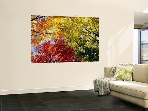 Färgrika träd på hösten, höst, låg vinkel Övrigt