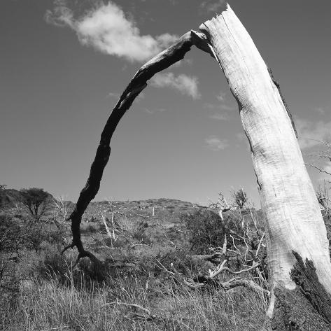 Fallen Branch of a Dead Tree Photographic Print ...