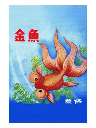 Fancy Bubble Eye Goldfish Art Print