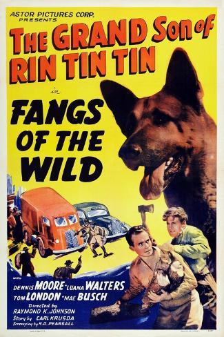Fangs of the Wild, Rin Tin Tin Jr., Dennis Moore, 1939 Art Print