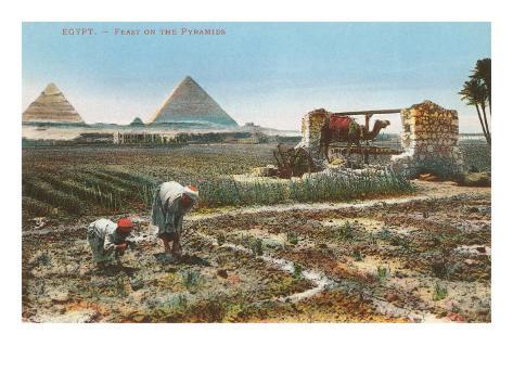 Farming by the Nile, Pyramids, Egypt Art Print