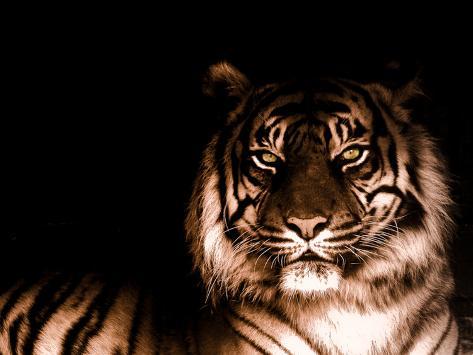 Portrait of Tiger Photographic Print