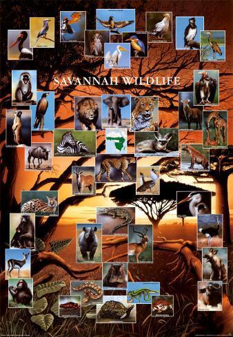 Fauna della savana Poster