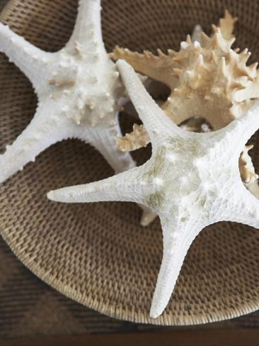 Starfish in a basket Photographic Print