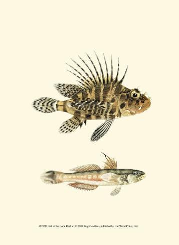 Fish of the Coral Reef VI Art Print