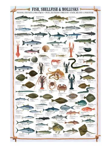 Fish Shellfish and Mollusk Premium Giclee Print
