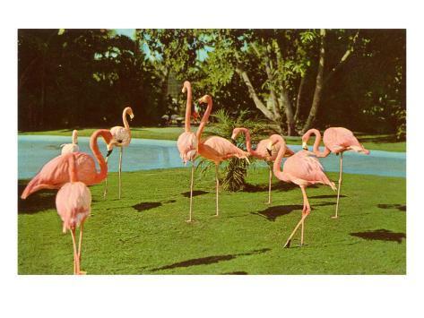 Flamingos at San Diego Zoo Art Print