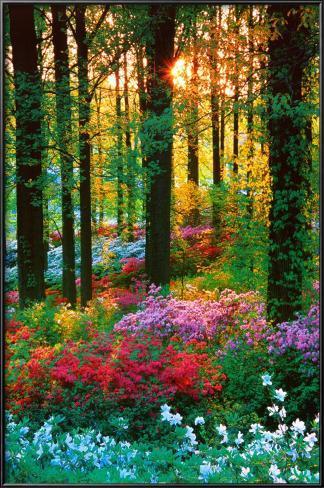 Floresta de flores Pôster com moldura laminada