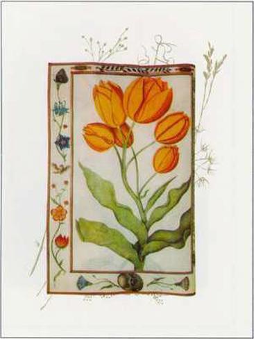 Botanics of 17th Century I Art Print