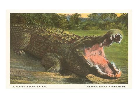 Florida Alligator, Myakka River State Park Art Print