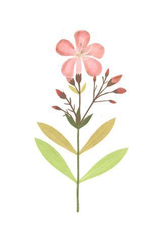 Flower Buds on Leafy Stem Art Print