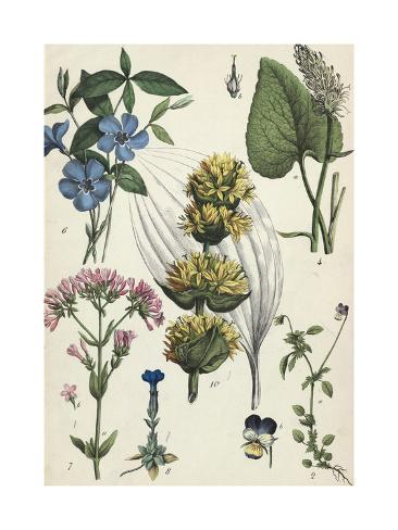 Flowered Heads of Various Plants Art Print