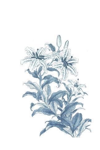 Flowering Lily Stems Art Print