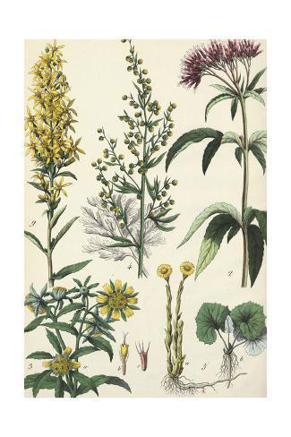 Flowering Plants and Weeds Art Print
