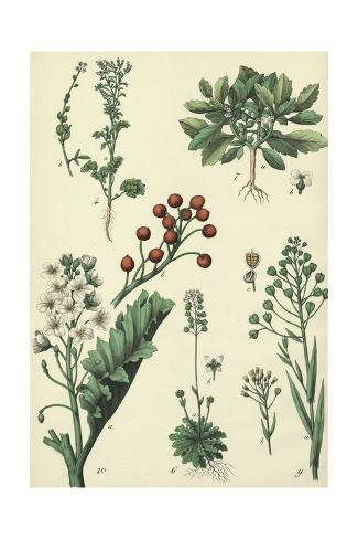 Flowering Plants with Berries Art Print