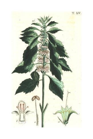 Flowering Stems Botanical Illustrations Art Print